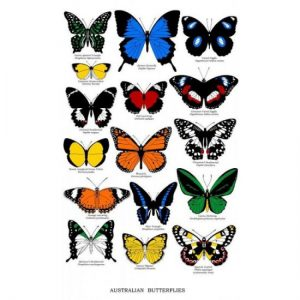 Australian Butterflies Cotton Tea Towel